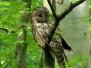 Half of a day birdwatching program in Lviv