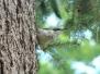 One day birdwatching program in Lviv