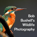 Bob Bushell's Wildlife Photography